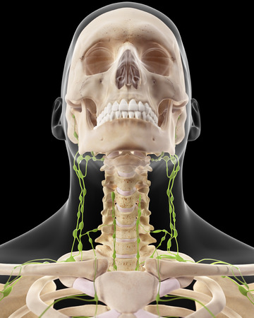 lymph nodes: medically accurate illustration of the cervical lymph nodes Stock Photo