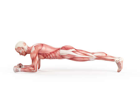 planking: exercise illustration - plank