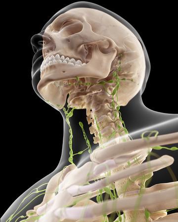 cervicales: ilustraci�n m�dica precisa de los ganglios linf�ticos cervicales Foto de archivo