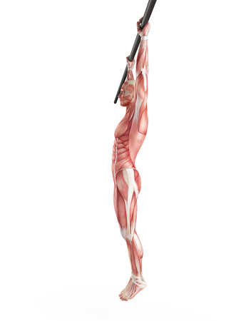 fit body: exercise illustration - hanging leg raises