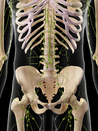 body torso: medically accurate illustration of the abdominal lymph nodes Stock Photo
