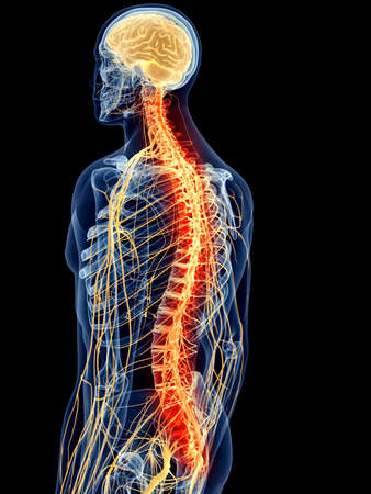 anatomy brain: medically accurate illustration - painful spine Stock Photo