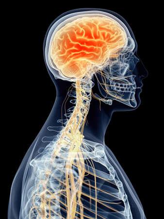 sistema nervioso central: m�dicamente correcta ilustraci�n - dolor de cabeza Foto de archivo