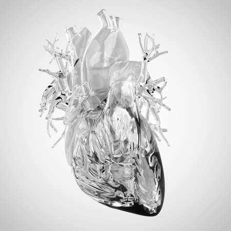 vena: medically accurate illustration of human heart made of glass