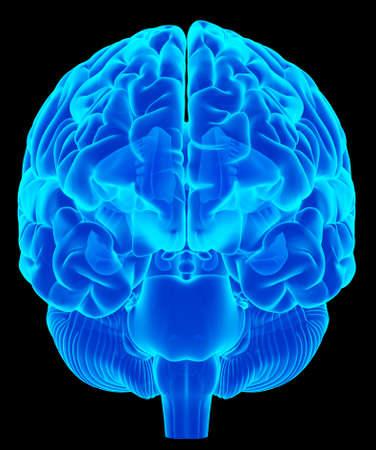 gente saludable: ilustraci�n m�dica precisa del cerebro humano Foto de archivo