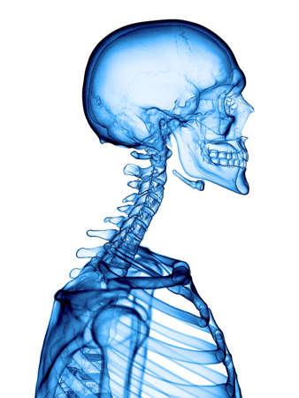 colonna vertebrale: illustrazione medica accurata della colonna cervicale