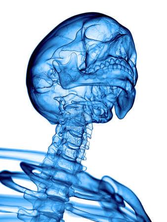 cervicales: ilustración médica precisa de la columna cervical