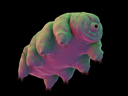 illustration and: medically accurate illustration of a water bear Stock Photo