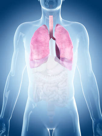 pleura: medically accurate illustration of the lung Stock Photo