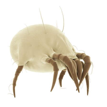 polvo: ilustración médica precisa de un ácaro del polvo común Foto de archivo