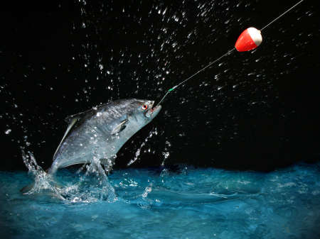 anglers: Catching a big fish with a fishing pole at night