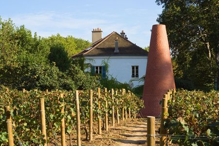 Vineyard at the house of gardening in Bercy area - Paris, France Stock Photo