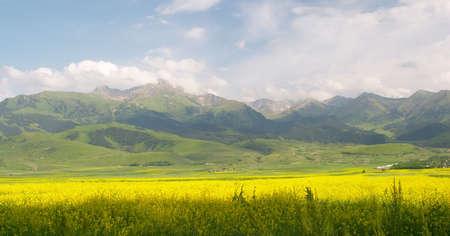 kyrgyzstan: Los campos en la base de Terskey Alatau Mt Rango sur de lago Issyk Kul Kirguist�n  Foto de archivo