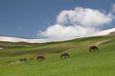 Horses grazing, Kyrgyzstan Stock Photo - 326623