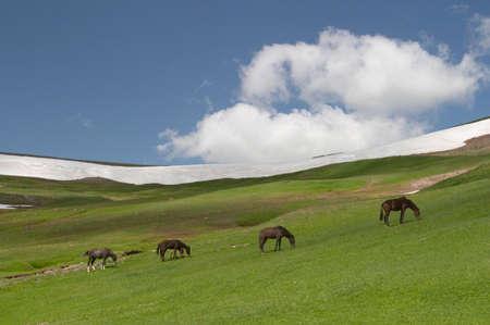 kyrgyzstan: Los caballos de pastoreo, Kirguist�n
