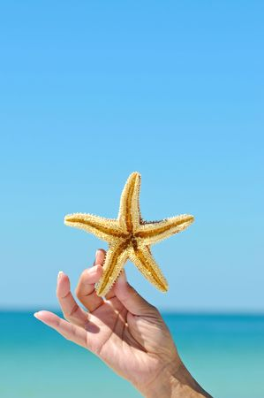 Womans Hand Holding a Starfish photo
