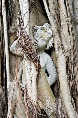 banias: Cherub Statue Enslaved in Banyan Tree Roots Stock Photo