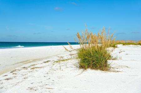 gulf of mexico: Beautiful Coastline on Anna Maria Island, Florida