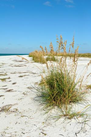anna: Beautiful Coastline on Anna Maria Island, Florida