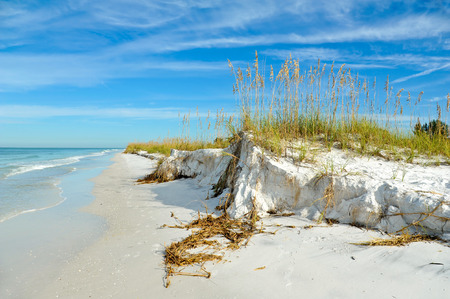 gulf: Beautiful Sand Dunes and Sea Oats on the Coastline of Anna Maria Island, Florida