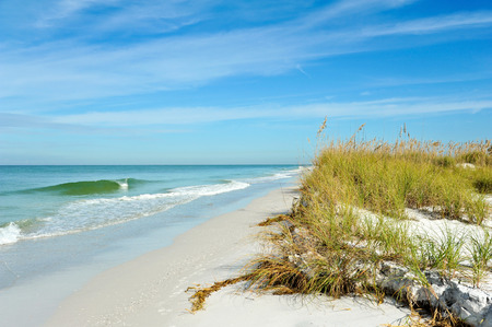 Beautiful Sand Dunes and Sea Oats on the Coastline of Anna Maria Island, Florida