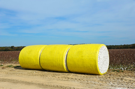 crop harvest: A Round Bale of Harvested Cotton Wrapped in Yellow Plastic Sirtting in the Field