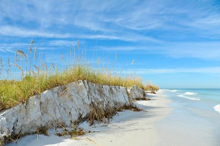 sea oats: Beautiful Sand Dunes and Sea Oats on the Coastline of Anna Maria Island, Florida