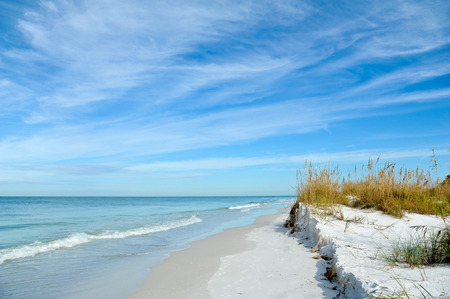 florida landscape: Beautiful Sand Dunes and Sea Oats on the Coastline of Anna Maria Island, Florida