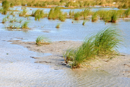 sea oats: Water puddled in a low lying area on the beach with sea oats and grasses