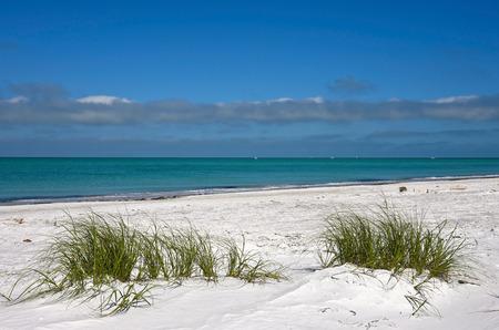 sea oats: Beautiful White Sand Beach and Grasses on the Coastline of Anna Maria Island, Florida
