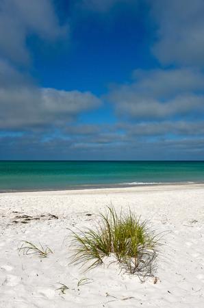 sea oats: Beautiful White Sand and Grasses on the Coastline of Anna Maria Island, Florida