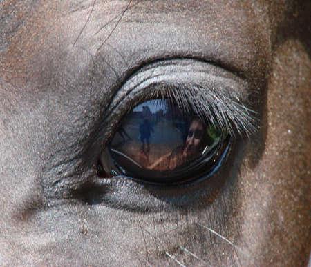 texturized: Brown Horse Eyeapple