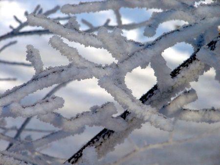 wintery: Frosty Wintery Tree Stock Photo