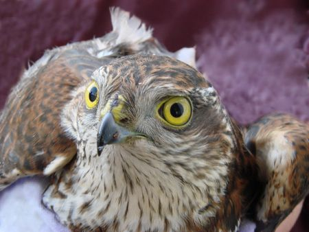 glance:  Bird�s dangerous glance