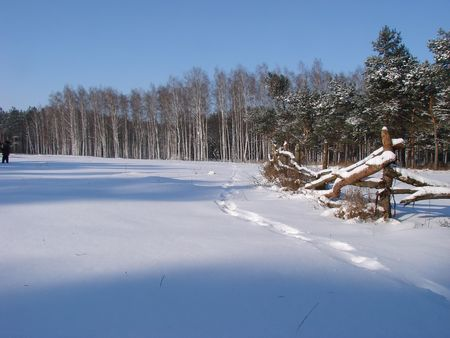 Winter snowy morning country landscape Stock Photo - 741794