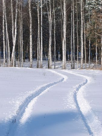 Winter snowy morning birch forest Stock Photo - 741793