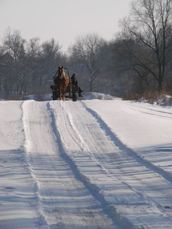 cart road: Winter snowy road thru forest with horse cart