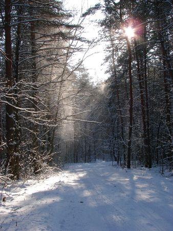 Winter snowy road thru morning pine wood photo