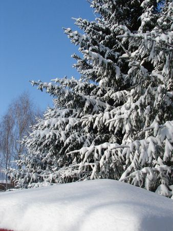 Winter snowy landscape with fur-trees Stock Photo - 751028