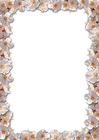 Floral border background with apricote flowers