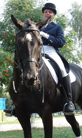 equestrian saddlewoman on black stallion 31 photo