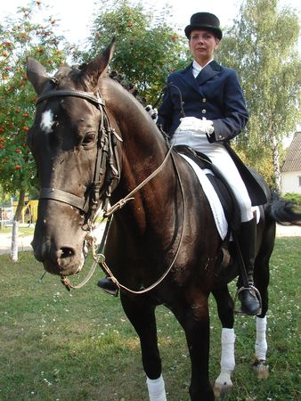 equestrian saddlewoman on black stallion 32 photo