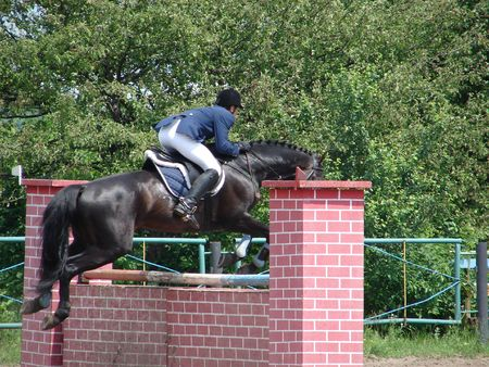 Jumping and running equestrian horse with jockey photo