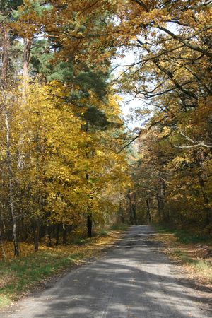 openair: Autumn highway with yellow trees
