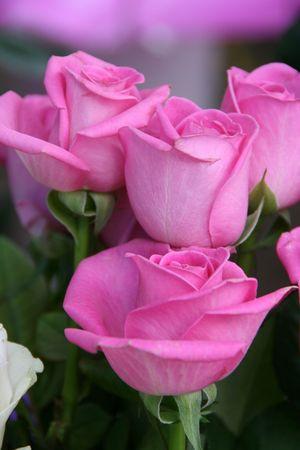 Few purple pink rose flowers bouquet