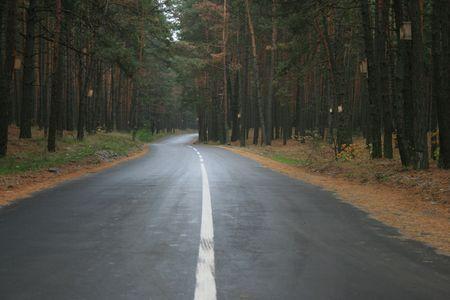 straight path: Highway thru old green pine wood