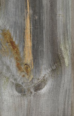 Knots on textured wooden plank like alien face Stock Photo - 2449391