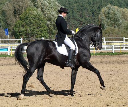 equestrian sportswoman riding black stallion horse