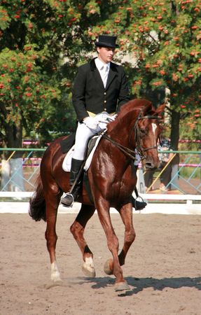equestrian sportsman riding brown horse in paddock Stock Photo