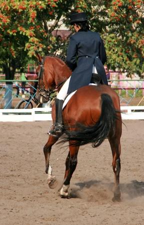 girth: equestrian sportswoman riding brown horse in paddock